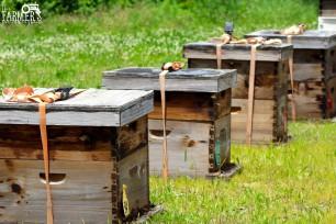 James Rhein's beehives