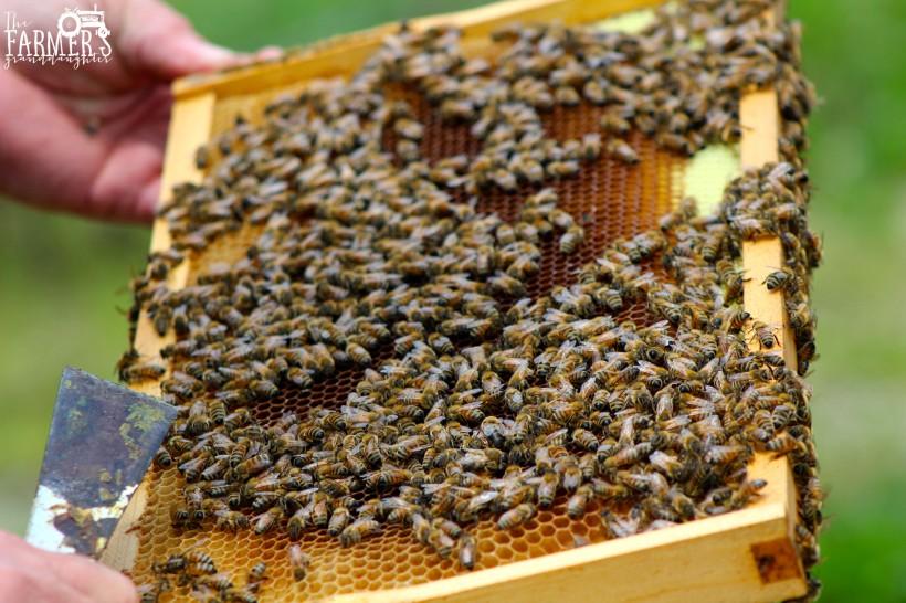 bees travel across frame