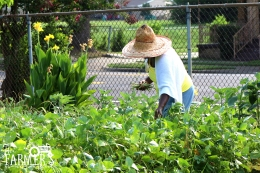 Loraaine volunteers by picking peas.